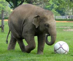 Donna the Elephant